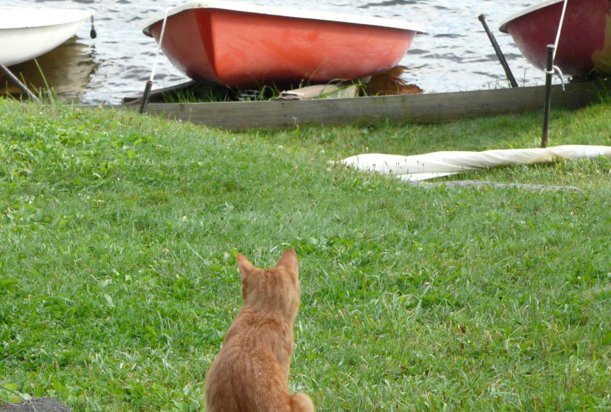 Camp Cherokee Waterfront Cat and canoes